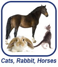 Cat, Horse, Rabbit, Hamster Grooming
